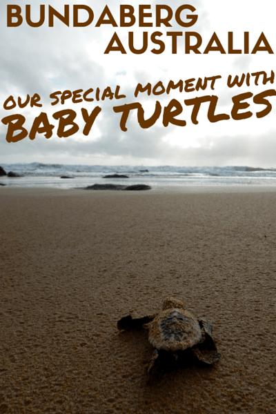 Bundaberg Mon Repos Baby Turtles