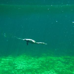 Best Cenotes for Snorkelling in Tulum (Mexico) - Casa Cenote - Cormoran