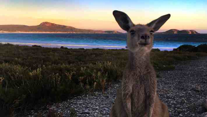 Lucky Bay & Cape Le Grand NP: a Paradise for Beach Lovers and Hikers [WA Road Trip]