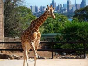 taronga zoo - sydney - australia