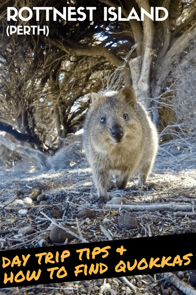 Rottnest Island Day Trip Itinerary and How To Find Quokkas