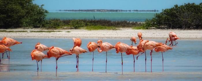 Rio Lagartos - flamingoes