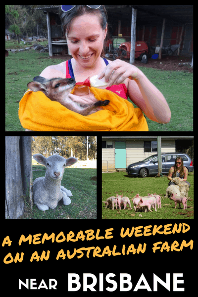 Visit a farm - baby wallaby rescue - australia - brisbane