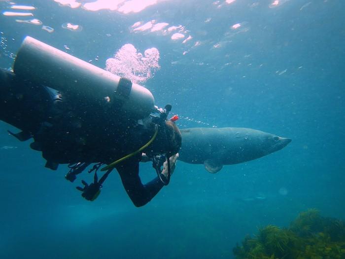 Tips Underwater Photo White Balance edit - after