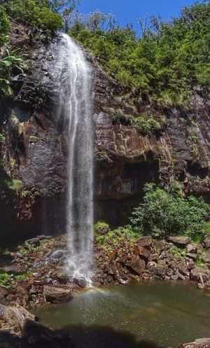 In Paradise 1 Day Waterfalls Nimbin Tea Tree Lake Koala Tour