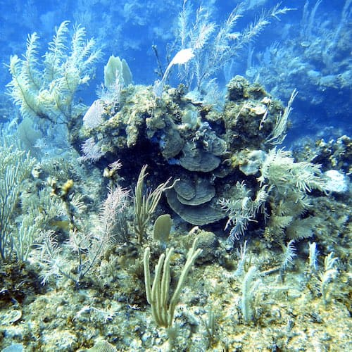 xcalak dive - reef