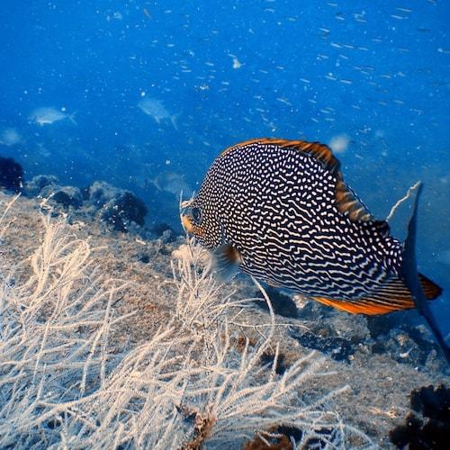 SS Yongala dive - Wreck + beautiful fish