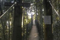 Why You Should Visit Lamington National Park Tree Top Walk