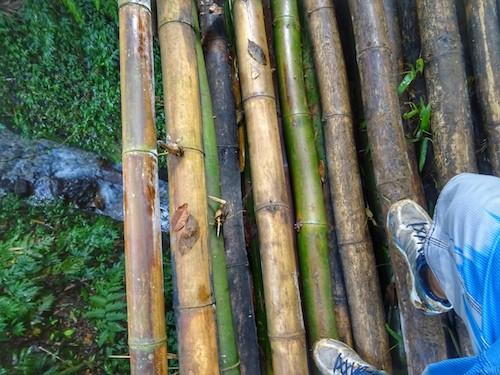 Vanuatu Millenium Cave Bamboo Bridge