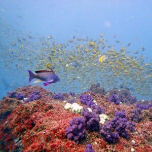 Diving Cherubs Cave Abundant Marine Life