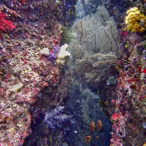 Diving Cherubs Cave Rock Gully