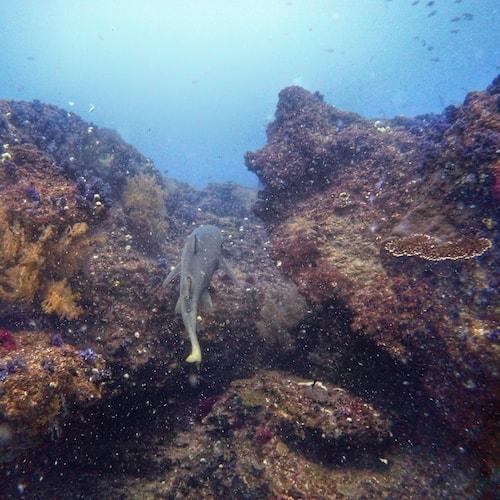 Diving Cherubs Cave Shark in Rock Gully