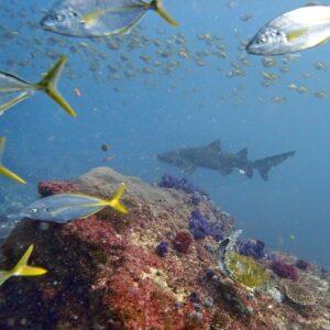 Diving Cherubs cave turtle shark