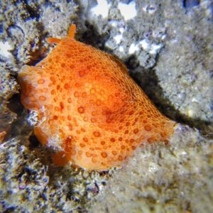 Gold Coast Seaway Night Dive Slug