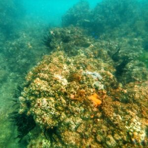 Kirra Reef Snorkelling