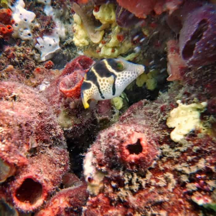 Scuba Diving Kirra Reef Gold Coast - Fish
