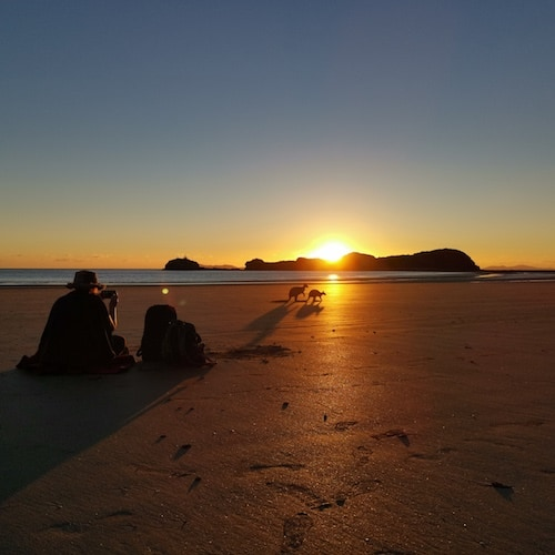 Mackay-Cape-Hillsborough-Wallabies-on-the-beach