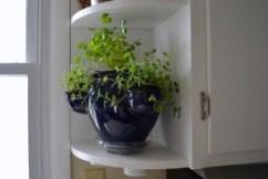 safe herbs