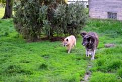 happy dogs
