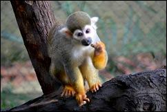 snack monkey