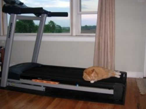 Leo on the treadmill