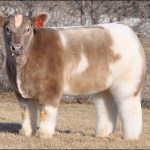 We Don't Have Fluffy Cows