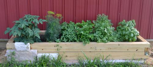herb garden July 8