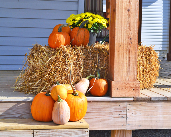 bright mums with pumpkins and straw bales for fall decorations
