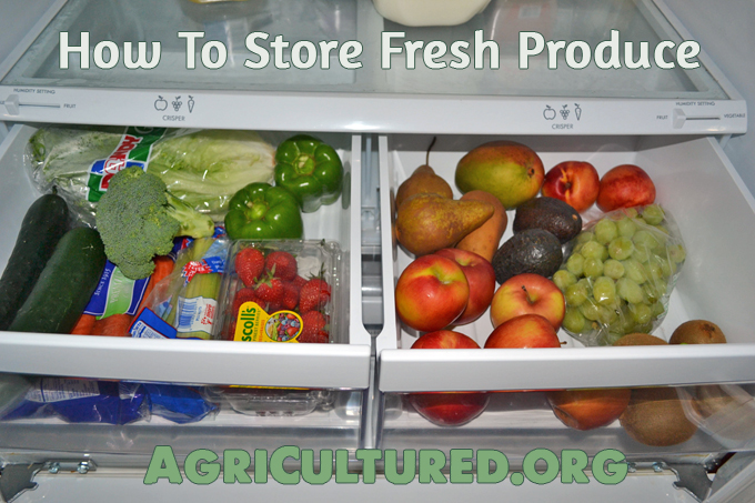 Spring and summer are great for lots of farm-fresh fruits and vegetables. Find out how to store produce so it stays fresh the longest!