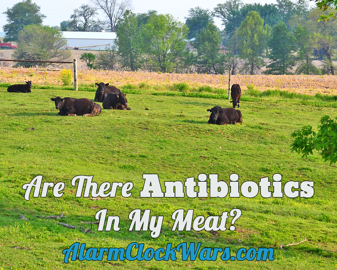 Even though many farmers do treat their sick animals with antibiotics, there are never antibiotics in meat. Farmers follow strict rules to make sure this never happens.