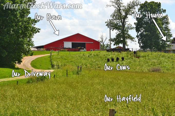 We live in the middle of 40 acres. And we wouldn't have it any other way!