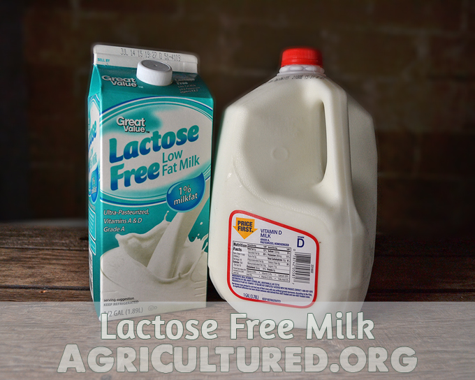 Lactose free milk. Did you know that if you need lactose free milk you can still drink dairy milk? Find out about lactose and how it is removed to make lactose free milk.