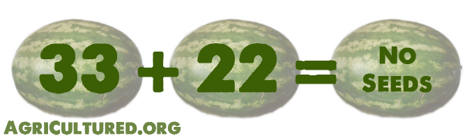 Breeding a watermelon plant that has 33 chromosomes with a watermelon plant that has 22 chromosomes will give you seedless watermelons.