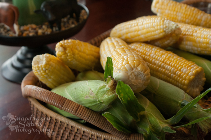 Sweet corn on a cow farm. Not all corn is created equal! We recently invited bloggers to visit our farm to see how we raise sweet corn and beef cows.