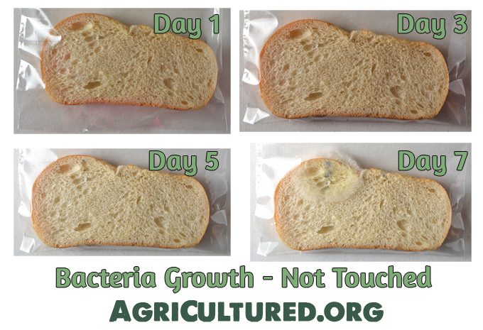 Even bread that hasn't been touched will start to grow bacteria.