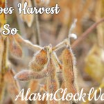 Why Does Harvest Happen So Fast?