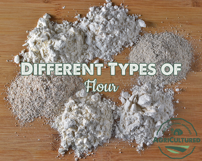 Different Types of Flour on AgriCultured. Flour comes in many different varieties. Take a closer look at some of the more common types of flour, and how they are different.