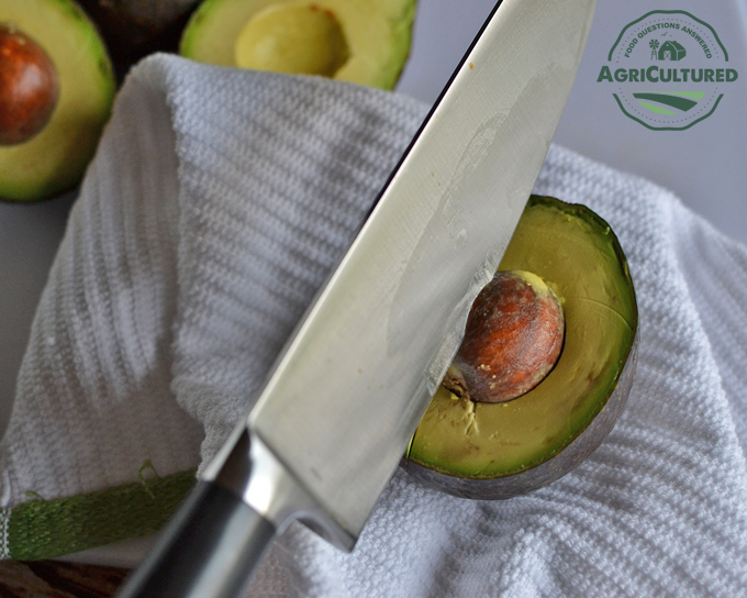 Hold the avocado in a dish towel in your hand, and carefully slap a knife into the avocado seed.