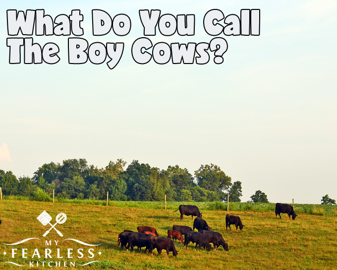 What Do You Call the Boy Cows? from My Fearless Kitchen. Did you know that boy cows aren't called cows at all? What about the babies? Baby cows have different names if they are boys or girls, too!