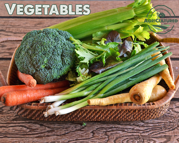 Vegetables are the edible root, stem, leaf, or unopened flower bud of a plant.