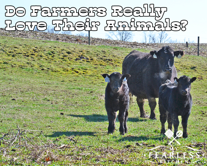 Do Farmers Really Love Their Animals? from My Fearless Kitchen. Have you ever wondered if farmers get attached to their animals? Our livestock are different than our pets, but farmers love all the animals in their care.
