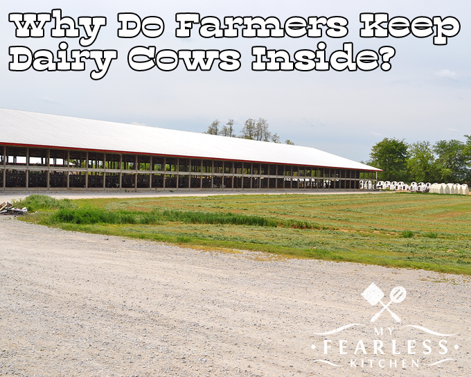 Why Do Farmers Keep Dairy Cows Inside? - My Fearless Kitchen