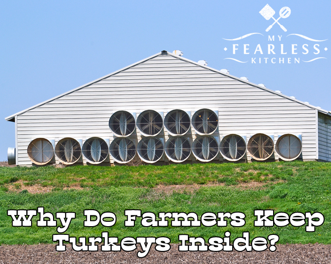 Why Do Farmers Keep Turkeys Inside? from My Fearless Kitchen. Have you wondered why farmers keep turkeys inside? Turkeys don't like to be too hot or too cold. That's just one of the reasons farmers keep turkeys inside.