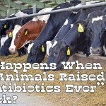 "What Happens When Farm Animals Raised to be ""No Antibiotics Ever"" Get Sick?"