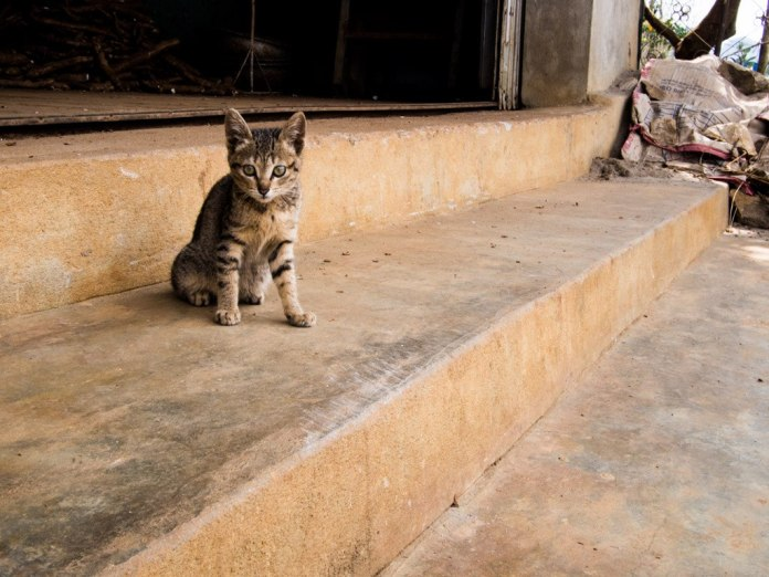 Kitten spotted at a roadside rest break, near Tuan Giao.