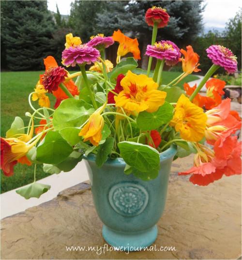 Meu Top 5 razões e dicas para chagas crescem no seu jardim-myflowerjournal.com (1)