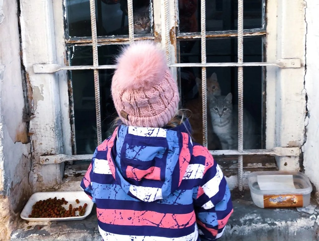 Cats at a window - where to stay for 3 days in Tbilisi