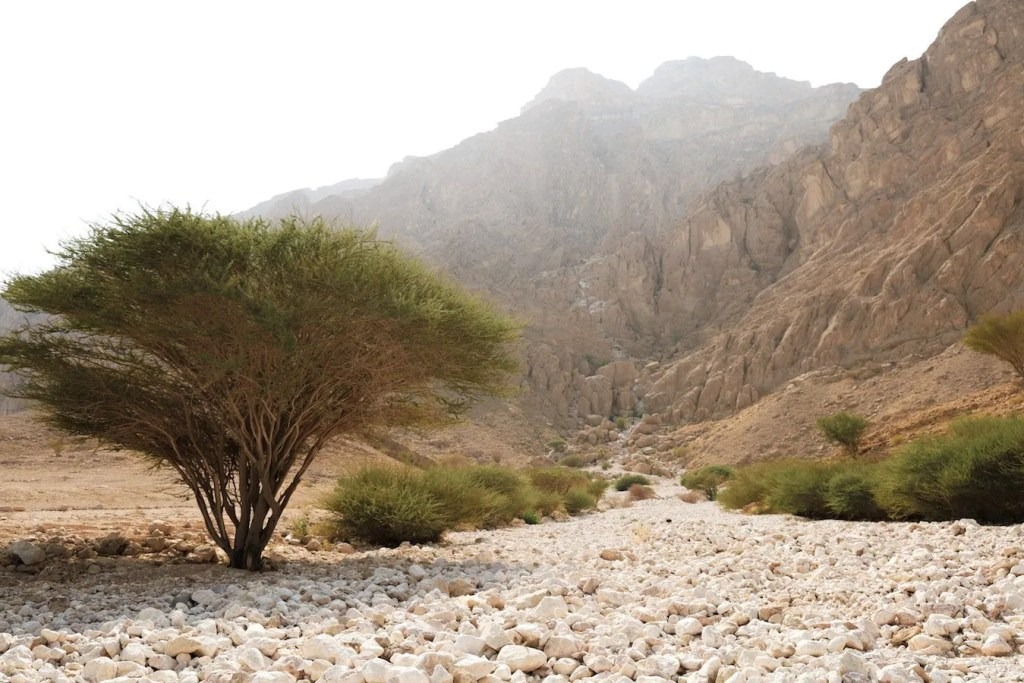 The white wadi - places to visit in Al Ain