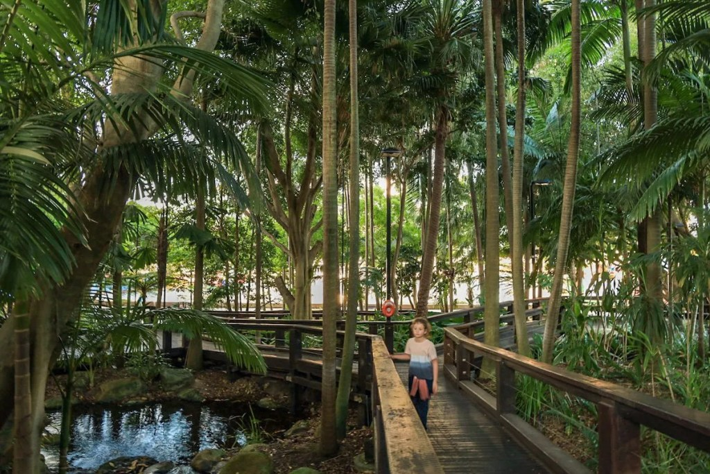 Sub tropical rainforest in Brisbane city - exploring Brisbane on a budget