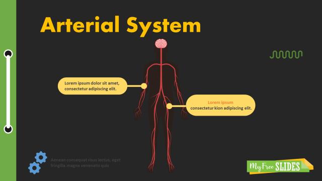 Human Arterial System presentation